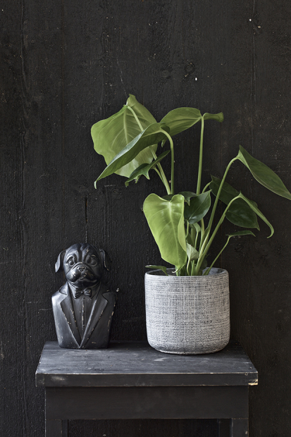 Satsa på mörka, murriga färger och stora gröna växter som till exempel en Monstera. Foto: Blomsterlandet.