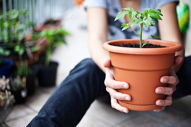 Utnyttja balkongen till att odla alltifrån vackra blommor till kryddor, frukter, bär och grönsaker.